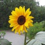 Blumen 13, 6