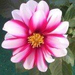 Blumen 13, 7