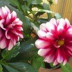 Blumen 13, 8