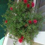Blumen 13,5