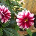 Blumen 13,9
