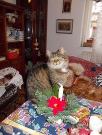 25-12 Katze Barbara