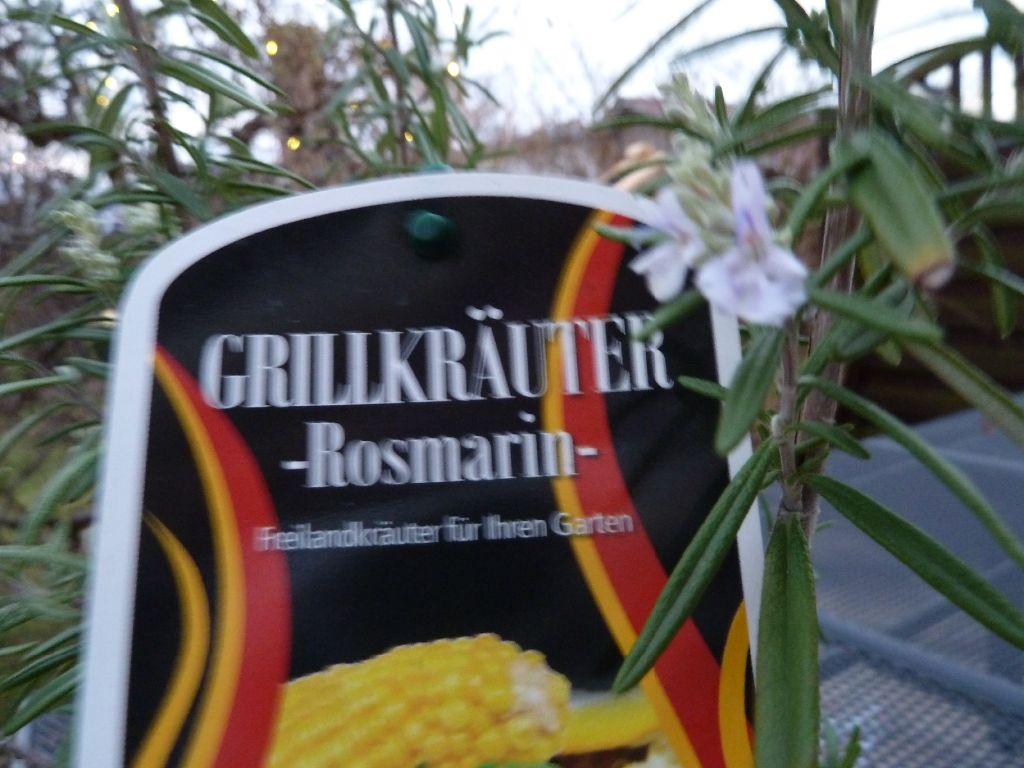 11.1.14 Grillkräuter