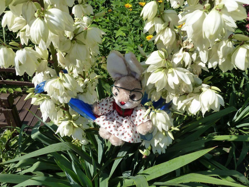 10.7.14 Hasenoma allein in Blumen