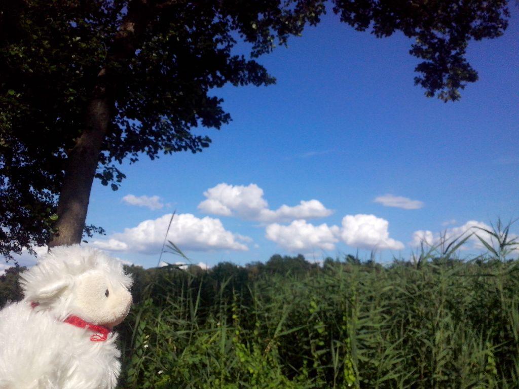 8.7.14 Glücksp.Wolken