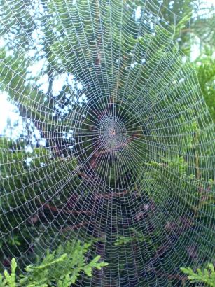 2056 Volker Kniesegl Spinnennetz