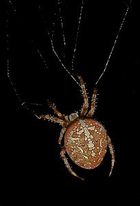 30000 so weben Spinnen ihr Netz