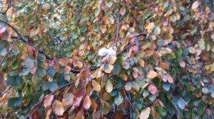 4004 Entdeckung am Blätterbunt